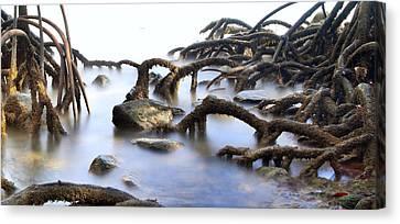 Mangrove Tree Roots Canvas Print