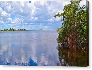 Canvas Print featuring the photograph Mangroves In Matlacha Florida by Timothy Lowry