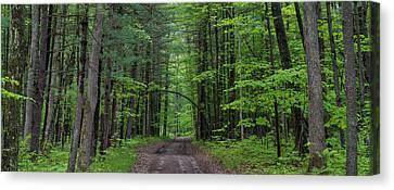 Manistee National Forest Michigan Canvas Print by Steve Gadomski