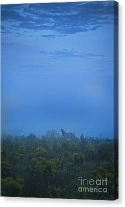 Manitoulin Magic Canvas Print by Terry Hrynyk