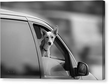 Mans Best Friend Riding Shotgun Canvas Print by Bob Orsillo