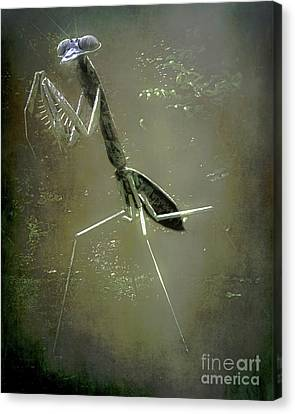 Pittsburgh Zoo Canvas Print - Mantis II by Arne Hansen