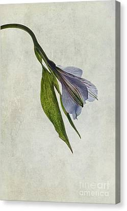 Mantis Lily Canvas Print