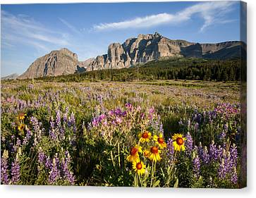 Canvas Print featuring the photograph Many Glacier Spring by Jack Bell