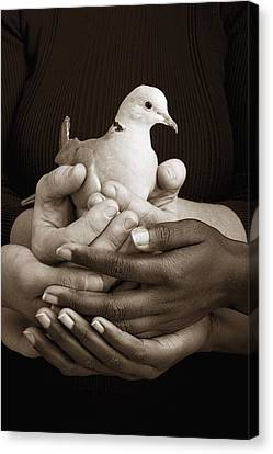 Many Hands Holding A Dove Canvas Print by Ron Nickel