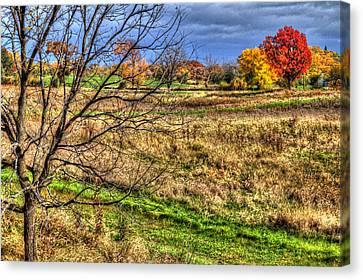 Illinois Canvas Print - Maple And Oak Colors by Roger Passman