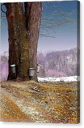 Maple Buckets Canvas Print by Nancy Griswold