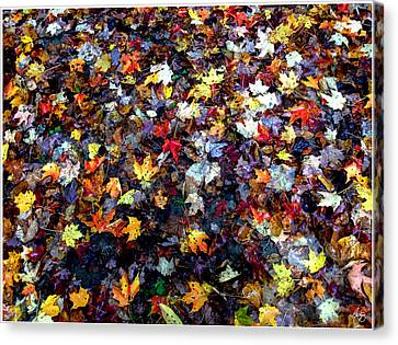 Canvas Print featuring the photograph Maple Chaos by Wayne King