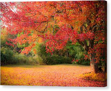 Maple In Red And Orange Canvas Print by Jeff Folger