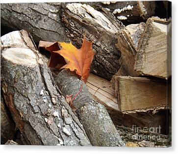 Maple Leaf In Wood Pile Canvas Print by Brenda Brown