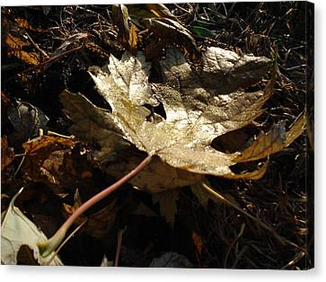 Canvas Print featuring the photograph Maple Leaf by J L Zarek