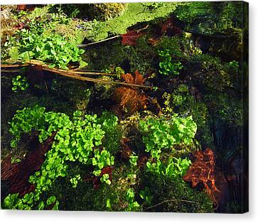 Maple Leaves And Watercress Canvas Print by Robin Street-Morris