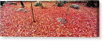 Maple Leaves On The Garden Canvas Print by Panoramic Images