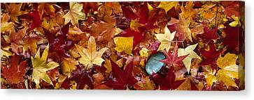 Maple Leaves Canvas Print by Panoramic Images