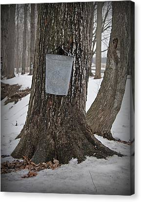 Maple Sugaring Canvas Print by John Stephens