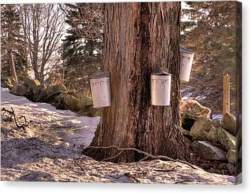 Maple Syrup Buckets Canvas Print by Tom Singleton