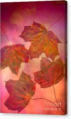 Maple Season Canvas Print - Maple Syrup by Jan Bickerton