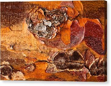 Maple Tree Bark Canvas Print