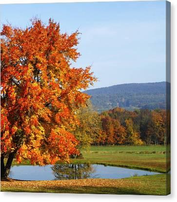 Maple Tree Canvas Print by David Simons