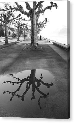 Maples Along Quai Perdonnet Canvas Print