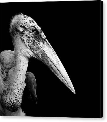 White Birds Canvas Print - Portrait Of Marabou Stork In Black And White by Lukas Holas