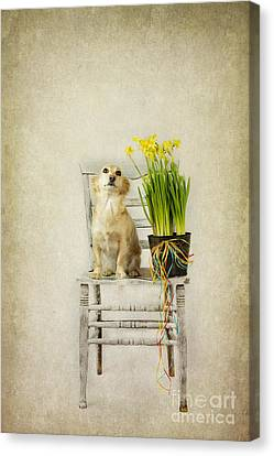 March Canvas Print by Elena Nosyreva