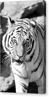 Animal Canvas Print - Marcus by Trish Tritz