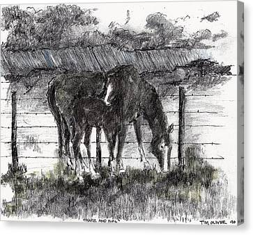 Canvas Print featuring the mixed media Mare And Foal by Tim Oliver