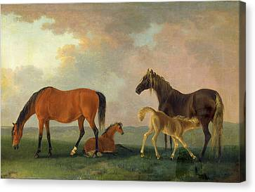 Mares And Foals, Facing Left, Sawrey Gilpin Canvas Print