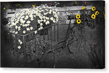 Marguerites And Bicycle Canvas Print