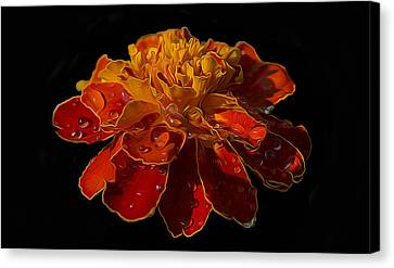 Marigold Tagetes Canvas Print by Michael Moriarty