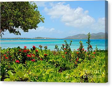 British Virgin Islands Canvas Print - Marina Cay Dock by Carey Chen