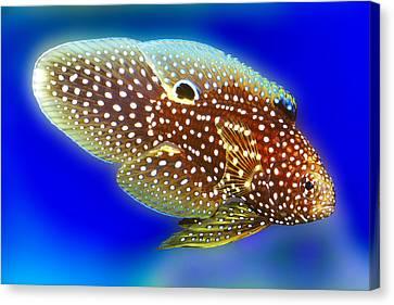 Marine Beta Fish Calloplesiops Altivelis Canvas Print by Wernher Krutein