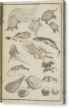 Marine Life Canvas Print by British Library