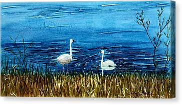 Marion Lake Swans Canvas Print
