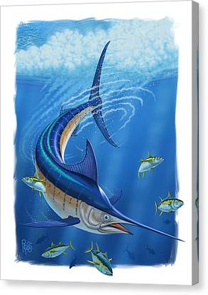 Marlin Canvas Print by Scott Ross