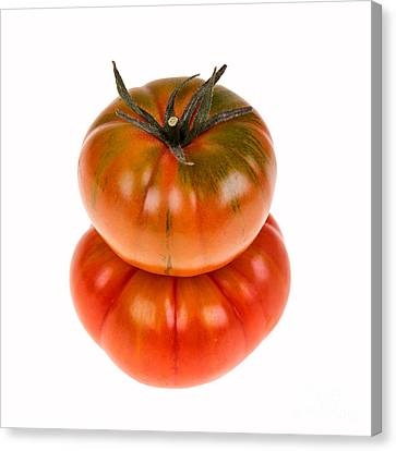 Marmande Tomatoes Canvas Print by Jane Rix