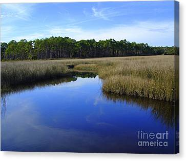 Marsh Water Creek Canvas Print by Lew Davis