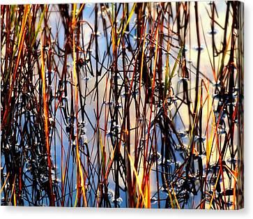 Marshgrass Canvas Print by Karen Wiles