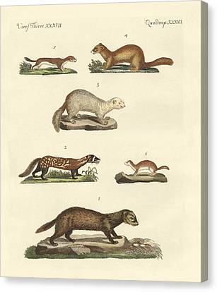 Martens And Weasel Canvas Print