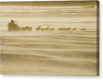 Martin Buser Runs On The Yukon River On Canvas Print by Jeff Schultz