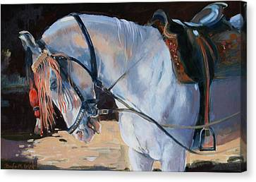 Marwari Horse Canvas Print by Jennifer Wright