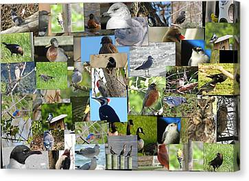 Maryland Birds Canvas Print by Tom Ernst