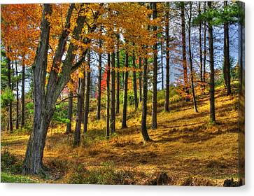 Maryland Country Roads - A Blaze Without Fire Canvas Print by Michael Mazaika
