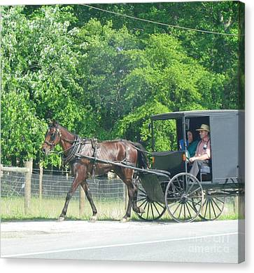 Maryland Horse Carriage Canvas Print by Ted Pollard