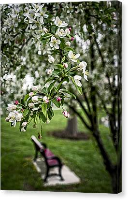 Mary's Tree And Bench Canvas Print by Wayne Meyer