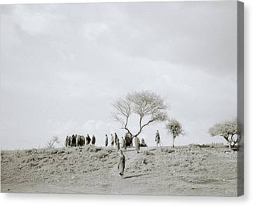 Iconic Africa Canvas Print by Shaun Higson