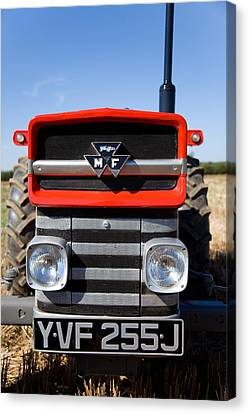 Massey Ferguson 135 Vintage Tractor Canvas Print by Paul Lilley