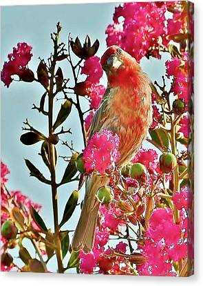 Matching Colors - Red Bird Canvas Print by Kim Bemis