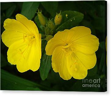Canvas Print featuring the photograph Matching Pair by Sara  Raber
